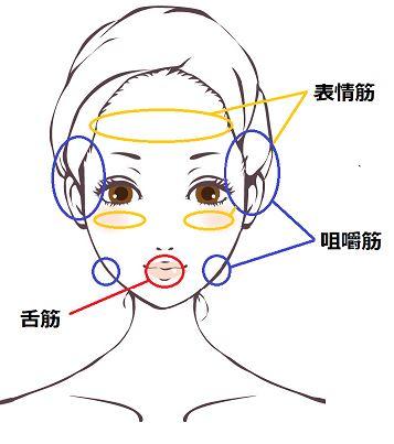 顔の筋肉の分布の画像